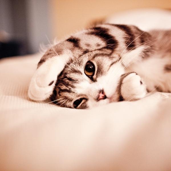 猫猫GIF动态图_猫猫表情_猫猫GIF动图-SOO搞笑表情包基搞的图片