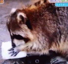 小浣熊 水洗棉花糖 融化 我的东西呢