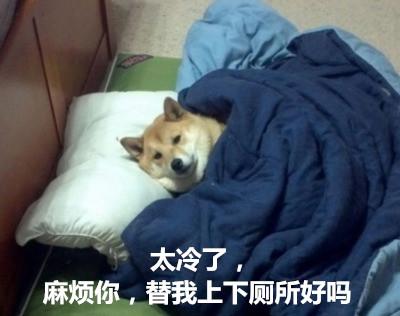 小狗 太冷了 麻烦你 替我上下 厕所好吗