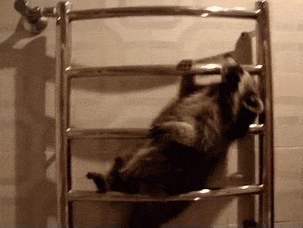 小浣熊 放开我 被卡住 挣扎
