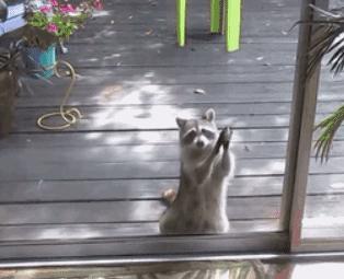 小浣熊 拜托拜托 开门啦 求求你 委屈 心疼