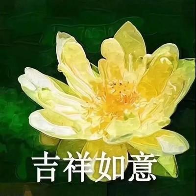 植物 花朵 吉祥如意 老年人表情包 搞怪 逗